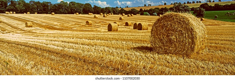 Panoramic view of a harvested wheat field with Straw Bales in the Rutland English countryside