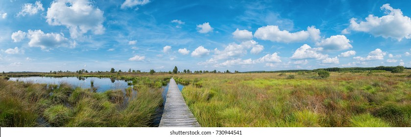 Panoramic view of the high Venn (Hautes fagnes) a bog landscape at the Eifel in belgium at summer