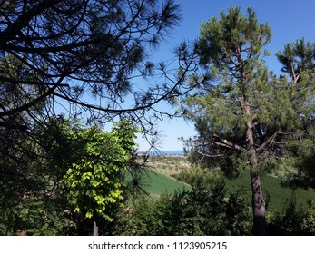 a panoramic view of the horizon sea in the middle of the trees and plants, Controguerra Teramo Italy