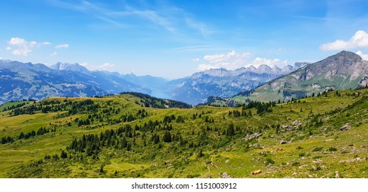 Panoramic view of idyllic, picturesque mountain scenery in the Alps with fresh green meadows and a mountain lake in the background on a sunny day in summertime, Alvier, canton St.Gallen, Switzerland