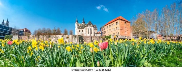 Panoramic view of Kloster church, ancient fortress wall, and flowers tulips at early Spring in Magdeburg, Germany, blue sky