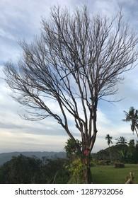 Panoramic view of Labuan Bajo hills Indonesia