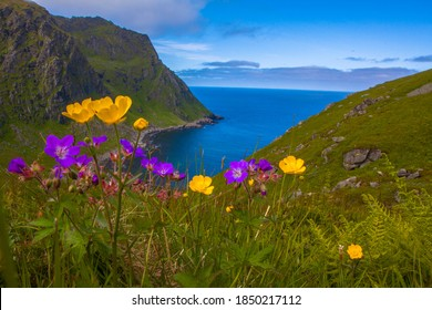Panoramic view from Lofoten Islands, mountains and sea with colorful flowers in the foreground, blurred background