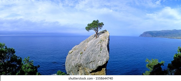 Panoramic view of a lonely tree growing on a rock. New World (Noviy Svet). Crimea