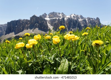 Panoramic view of the majestic north face of rugged Sella Mountain and lovely wild flowers on green grassy meadows at foothills under sunny summer sky in Pass Gardena, Dolomites, South Tyrol, Italy