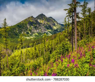 Panoramic view of the majestic Tatra Mountains in Slovakia. Summer idyllic landscape. Mighty mountains, wild woods and blooming meadows. Splash of colors.