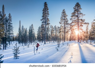 Panoramic view of man cross-country skiing on a track in beautiful nordic winter wonderland scenery in Scandinavia with scenic evening light at sunset in winter, Northern Europe
