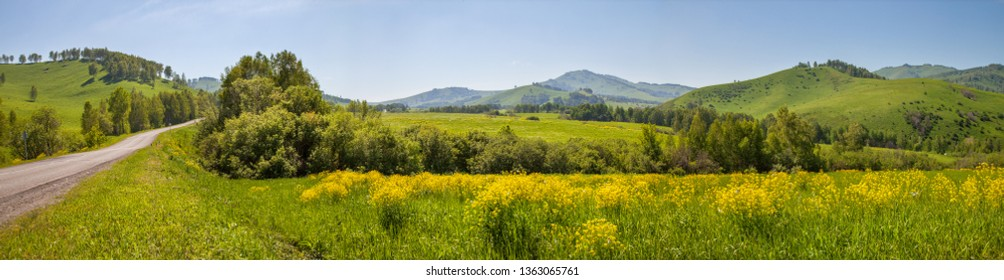 Panoramic view of a meadow blooming with yellow flowers. Country road. Green hills and blue sky, daylight. Spring background.