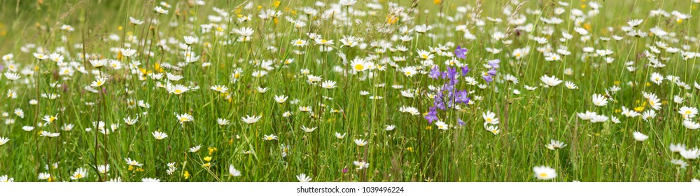 panoramic view to meadow with many flowers at spring