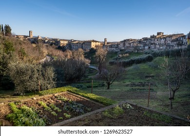 Panoramic view with the medieval towers of the village of Colle di Val d'Elsa, Siena, Tuscany - a vegetable garden in the foreground