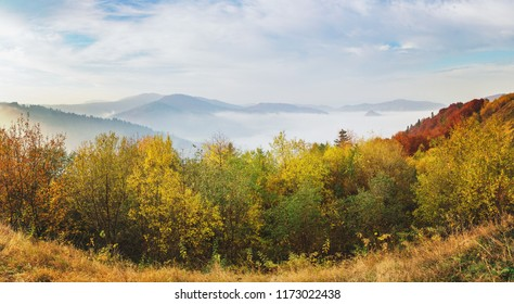 Panoramic view of misty autumn morning in hills mountains covered by beech forest.