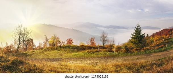 Panoramic view of misty autumn sunrise in hills mountains covered by beech forest.