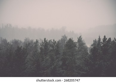 panoramic view of misty forest. far horizon - retro vintage film effect