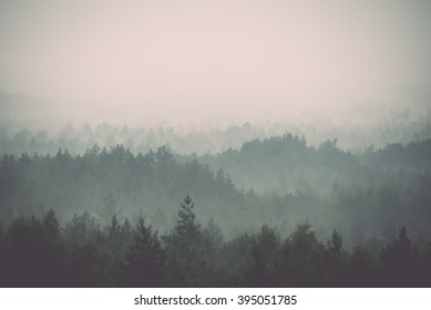 panoramic view of misty forest. far horizon - vintage film effect