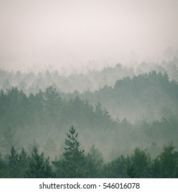 panoramic view of misty forest. far horizon - instant vintage square photo