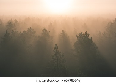 panoramic view of misty forest at majestic sunrise over trees. far horizon with light rays and lens flare effect - vintage effect look