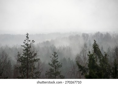 panoramic view of misty rain forest. far horizon