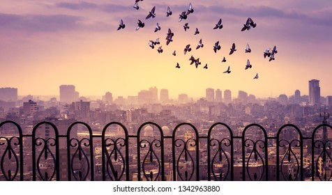 Panoramic view of modern Cairo with silhouettes of skyscrapers at sunset. Cityscape of Cairo with flying birds over the Citadel of Saladin and soft mist over the modern downtown.