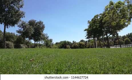 Panoramic view of modern park environment and green grass field among trees