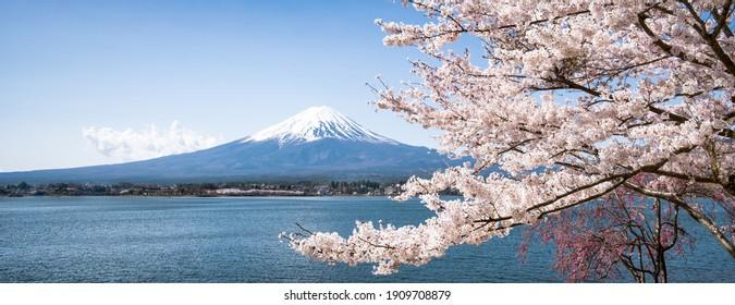 Panoramic view of Mount Fuji with cherry blossom tree, Lake Kawaguchiko, Japan