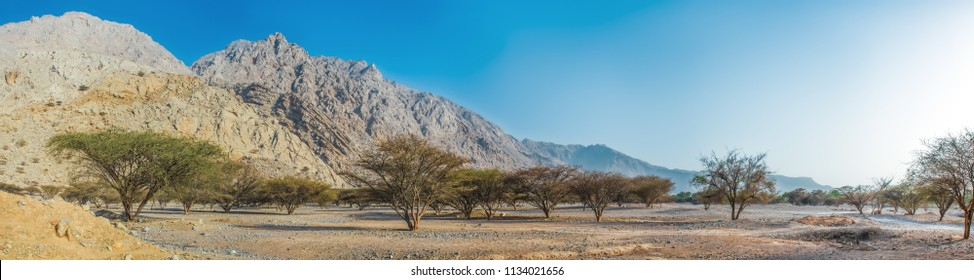 Panoramic view of the mountainous terrain in the desert with a green valley, RAK, UAE, Jun.2018