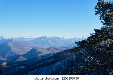 Panoramic view of the mountains. In the foreground are branches of snow-covered trees, against the background is a clear blue sky. Lago-Naki, The Main Caucasian Ridge, Russia