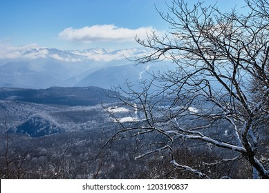 Panoramic view of the mountains. In the foreground are branches of snow-covered trees, against the background is a blue sky. Lago-Naki, The Main Caucasian Ridge, Russia