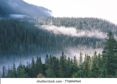 panoramic view of of mountains in misty forest. far horizon. - vintage retro