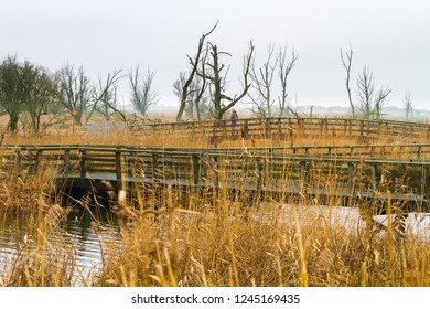 Panoramic view of the Netherlands. Bridge over canal in the Oostvaardersplassen, Netherlands.