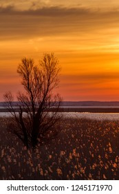 Panoramic view of the Netherlands. Nature reserve Oostvaardersplassen at dawn.