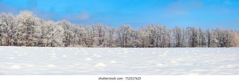 The panoramic view with nice snowy trees, blue sky and textured snow. Winter landscape for leaflets.