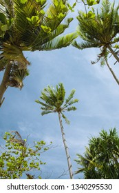 panoramic view of nice tropic palms on blue sky back