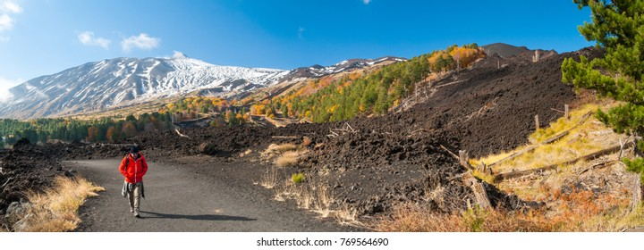 Panoramic view of northern side of Mount Etna, Sicily, with a pine and beech wood and a hiker on a lavic path - Shutterstock ID 769564690