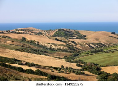 Panoramic view of olive groves and farms on rolling hills of Abruzzo and in the background the Adriatic Sea. Italy