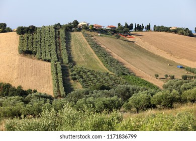 Panoramic view of olive groves and farms on rolling hills of Abruzzo