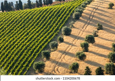 Panoramic view of olive groves, vineyards and farms on rolling hills of Abruzzo. Italy