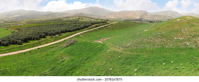 Panoramic view on agriculture valley of Upper Galilee. Springtime season. Grazing sheep on green grass hills and pastures. Fields, olive plantations and orchards. Bible landscape. Israel