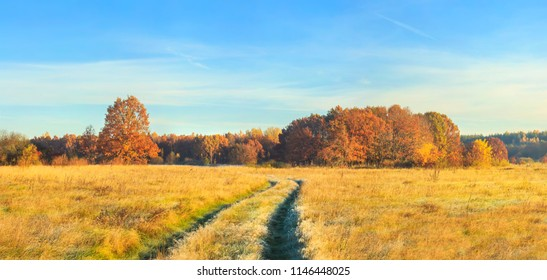 Panoramic view on autumn nature landscape on sunny day. Yellow and red trees on meadow and blue clear sky. Amazing rural scene. Fall. Vivid scenery of golden field with colorful trees on horizon