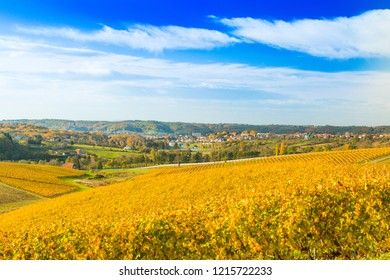 Panoramic view on Daruvar, town in Croatia, and countryside autumn vineyards