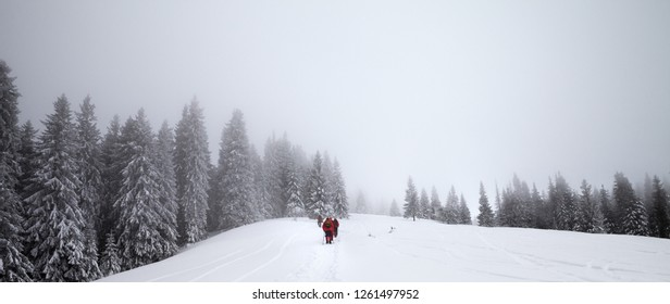Panoramic view on footpath in snow and hikers going up on snowy slope in snow-covered spruce forest at haze winter day after snowfall. Carpathian Mountains, Ukraine. Remote location.