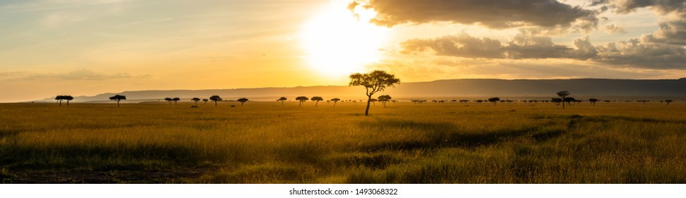 A panoramic view on the Masai Mara while sunset - Shutterstock ID 1493068322