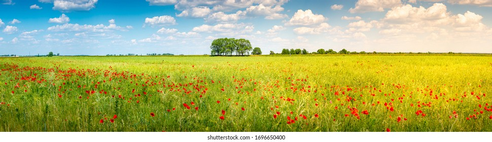 Panoramic view over beautiful green and yellow farm landscape and meadow field with red poppy flowers, Germany, sunny day, blue sky with clouds