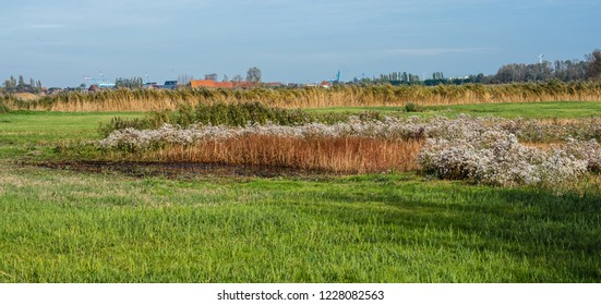 Panoramic view over the colorful meadows of the polders in Uitkerke, Blankenberge, Belgium.