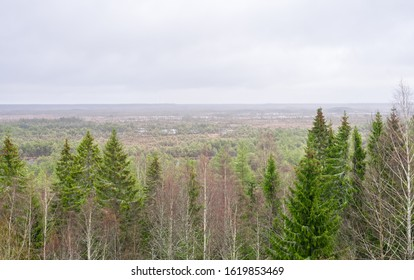 Panoramic view over Nordic forest to raised bog with bonsai like pines and numerous marshland pools in wet swamp area. Few spruces in foreground. Nature trail around lake Paukjärv in Estonia, Europe.