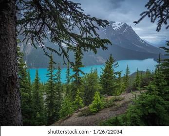 Panoramic view over Peyto Lake