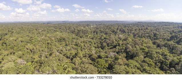 Panoramic view over an unbroken expanse of pristine Amazonian rainforest in Ecuador