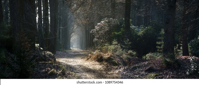 panoramic view of a path through a forest