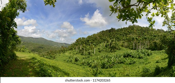 Panoramic view of the rain forest in Puerto Rico on a sunny day