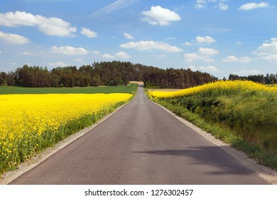 Panoramic view of rapeseed field, canola or colza in latin Brassica Napus, plant for green energy and oil industry, rape seed and road, landscape