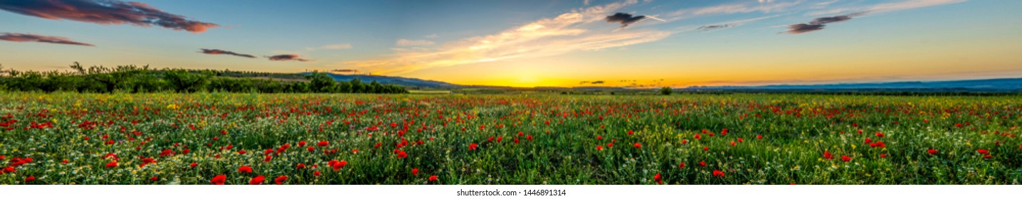 Panoramic view of a red poppies field with a cloudy blue sky during a sunny spring day - Image